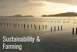 oyster sustainability and farming
